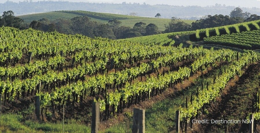 HUnter Valley Wine Tours - Winery