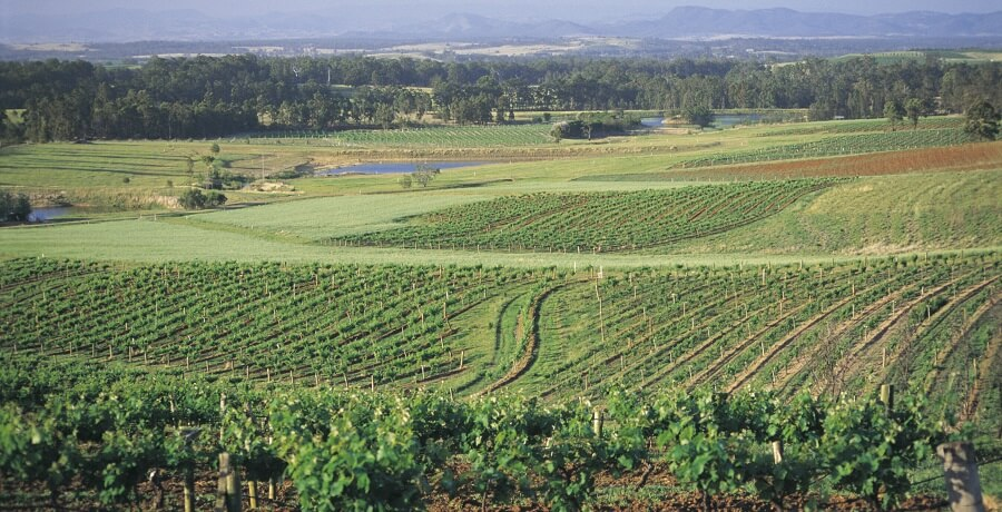 Hunter Valley Private Group Tours Winery