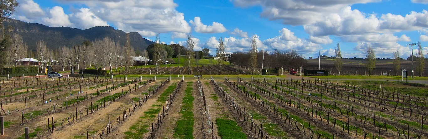 Which is the Best Hunter Valley Wine Tour?