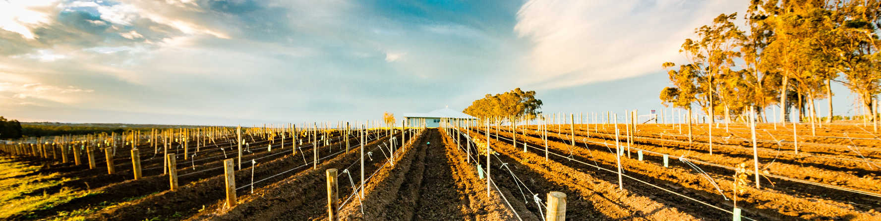 Discover Hunter Valley's best wines