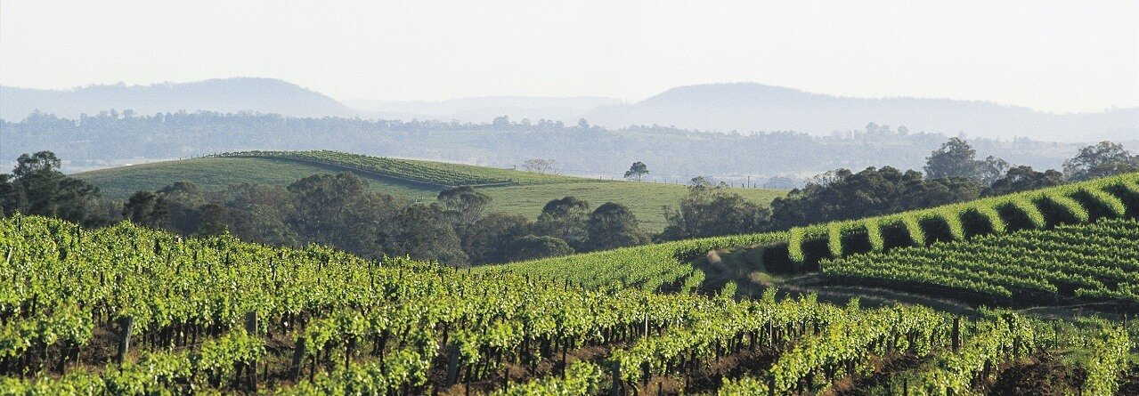 Hunter Valley Winery Tour from Hunter Valley $85