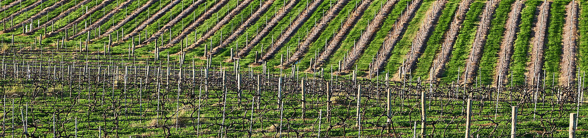 What wine is the Hunter Valley famous for?