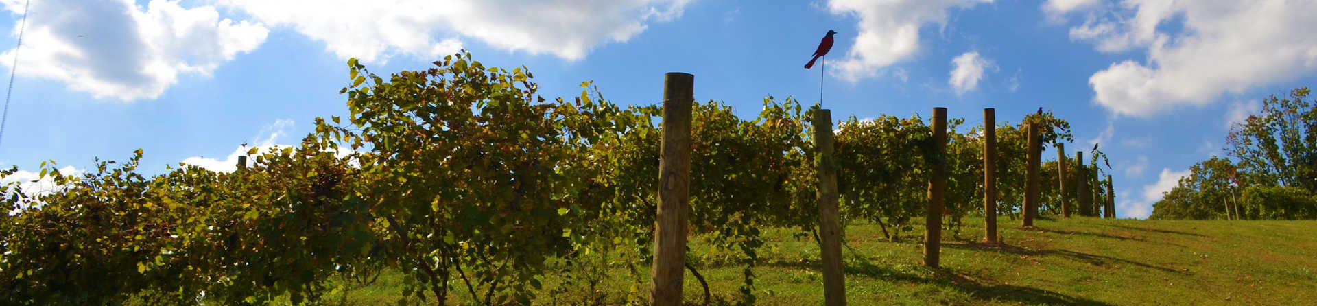 Why Drayton's Family Wines should be on your list!