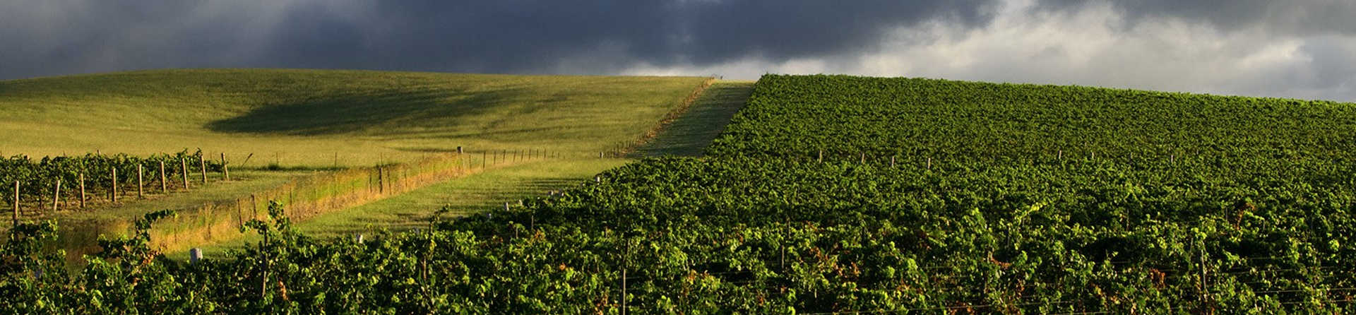 Do I have to book wine tasting in the Hunter Valley?