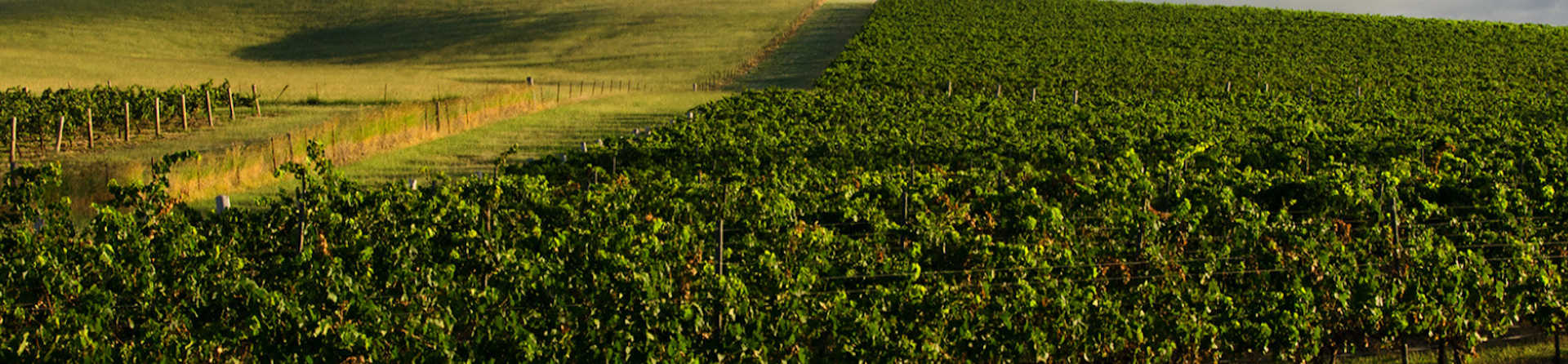 What is special about the Hunter Valley?
