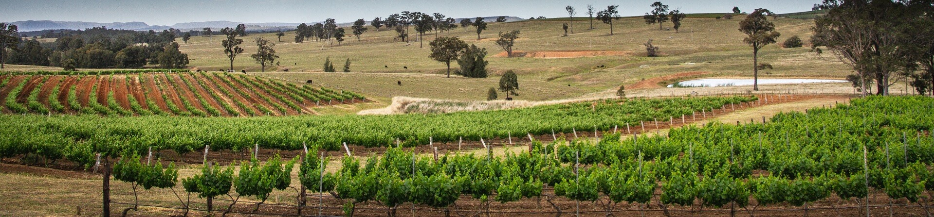 Where are McGuigan Wines from?